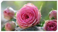 kwiaty dzien kob1